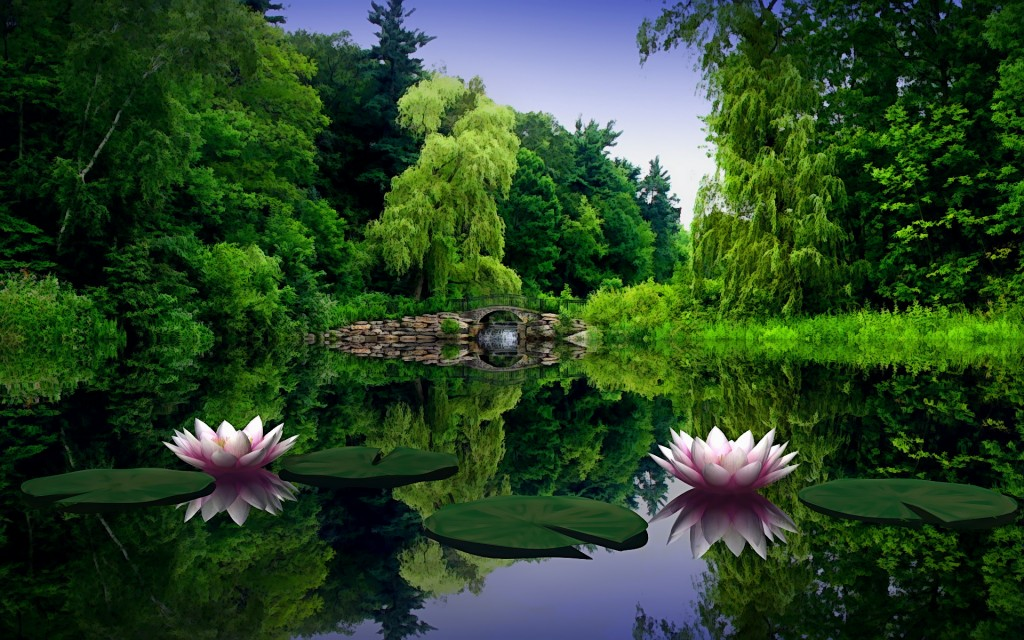 photo of lotus flowers on a pond