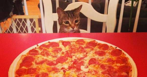 cat with pizza