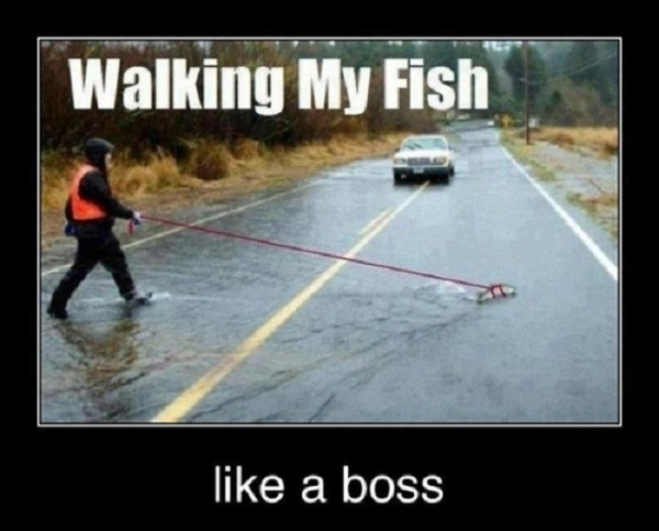 walking my fish