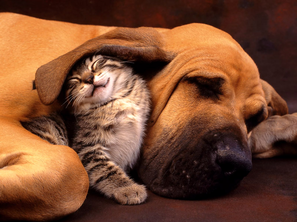 kittie and dog