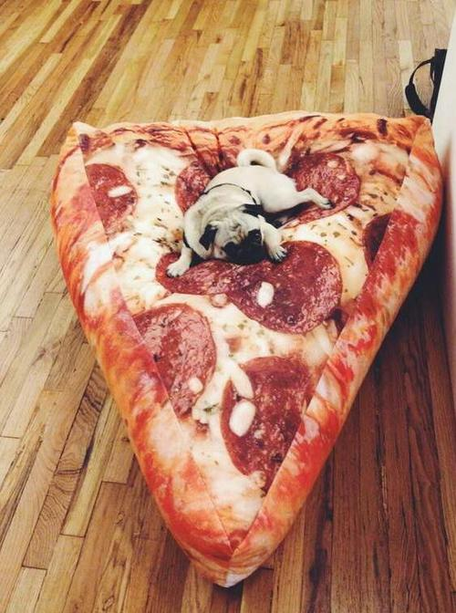 pug on a pizza bed