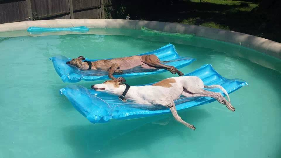 dogs relaxing