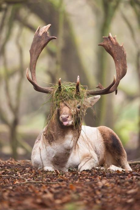 majestic deer