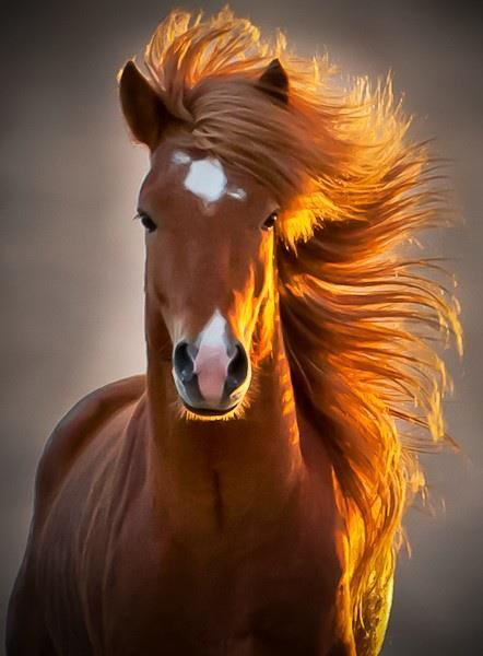 photogenic horse