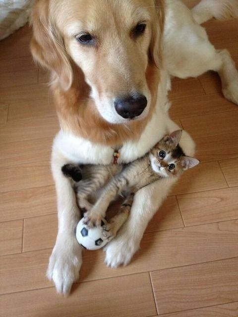 i protect you kitty