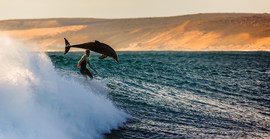 surfing with dolphin