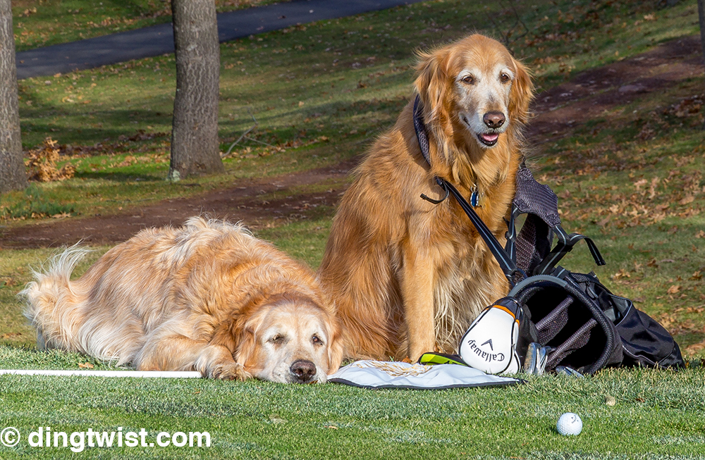 Dog Caddies-2 copy