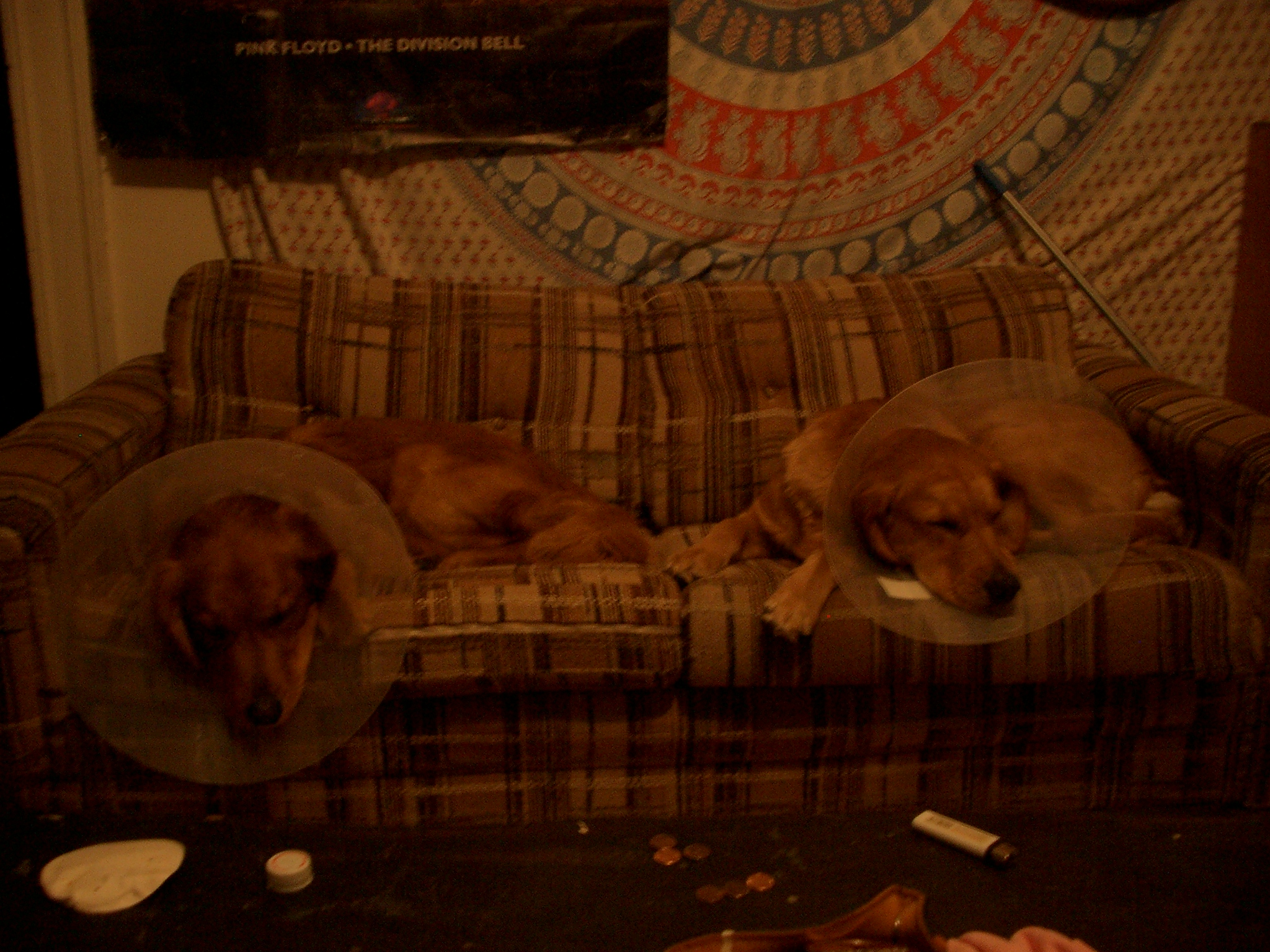 After getting their balls chopped off