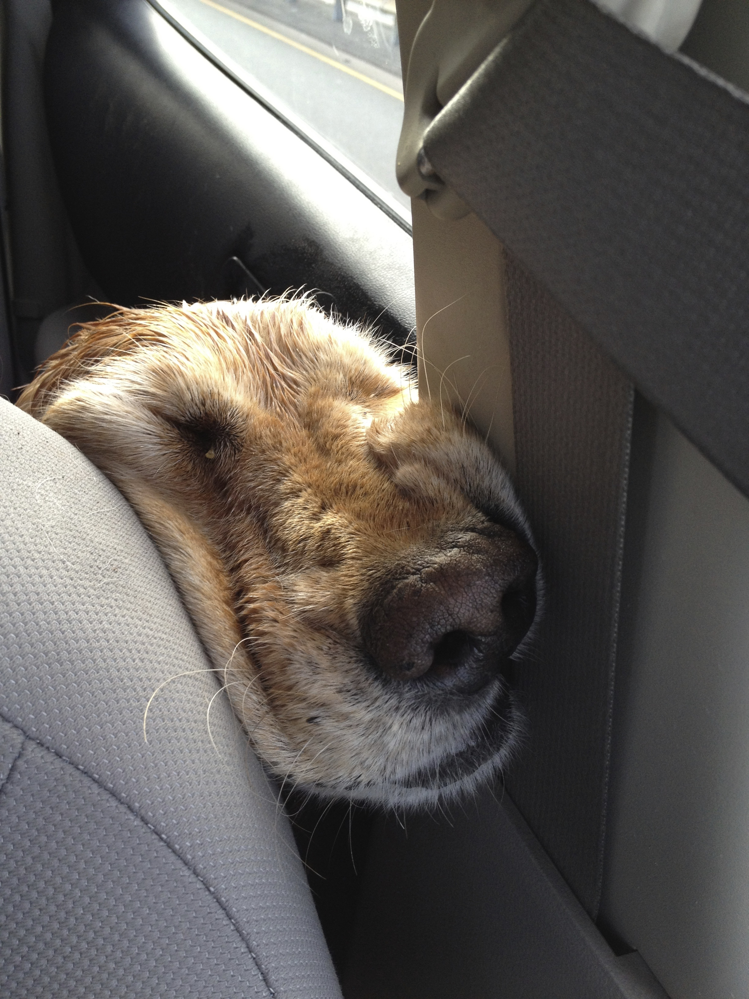 Tired on the ride home from a nice hike