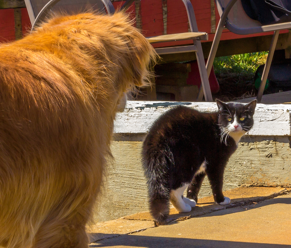 A staredown between Buddy and Mr. Dice, a new feline friend he made outside of Charlottesville, VA