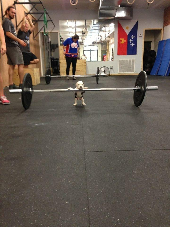 doggie lifter