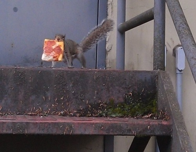 squirrel pizza