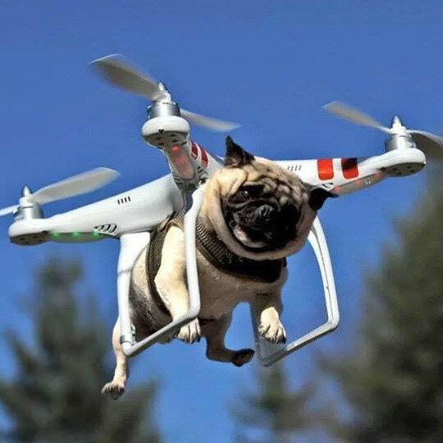 hover pug